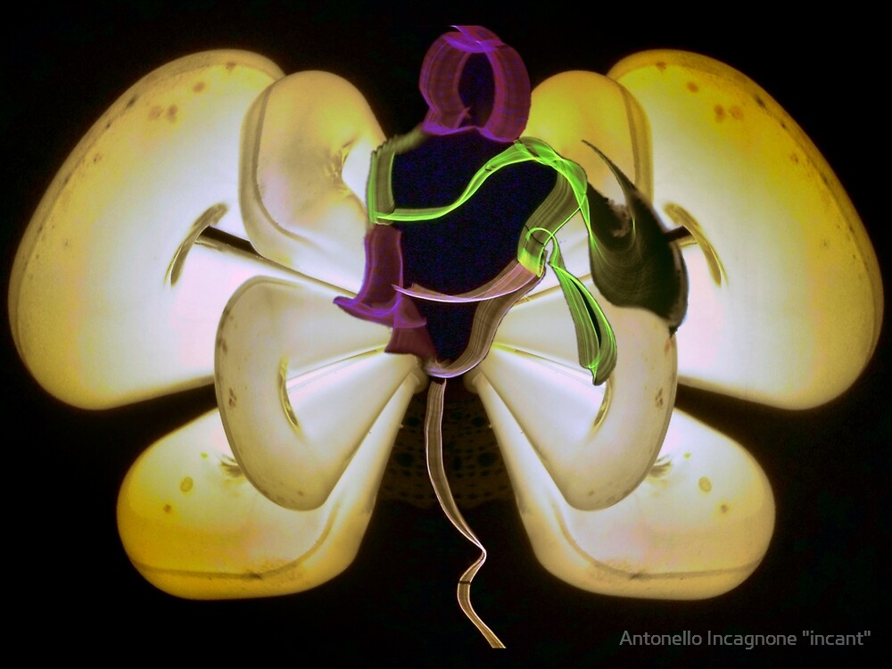 "Light butterfly 1 by Antonello Incagnone ""incant"""