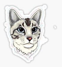 Lynxpoint Siamese cat portrait Sticker