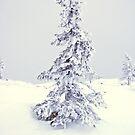 Winter Tree by Mandy Fell