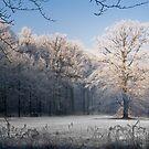 snow by Dirk Delbaere