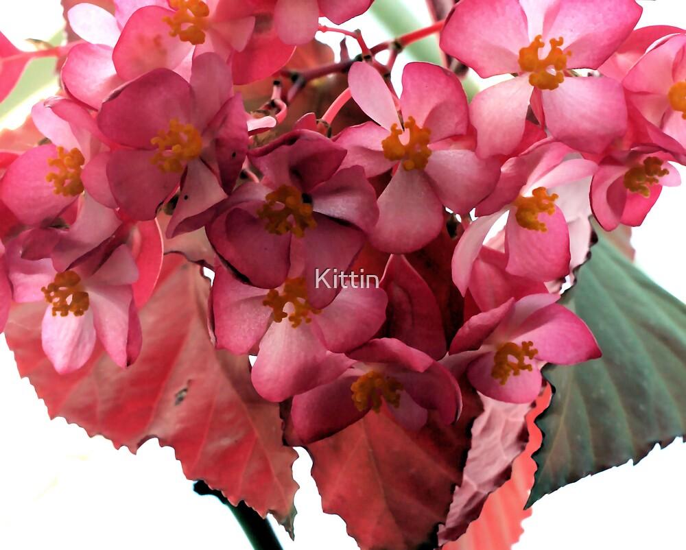 flowers by Kittin
