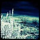Ttv: Lacking Moisture by PeggySue67