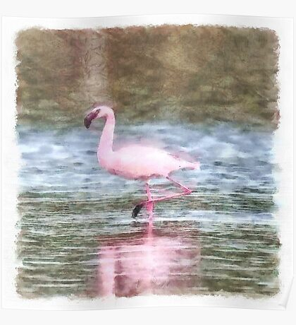 Lesser Flamingo Watercolor Poster