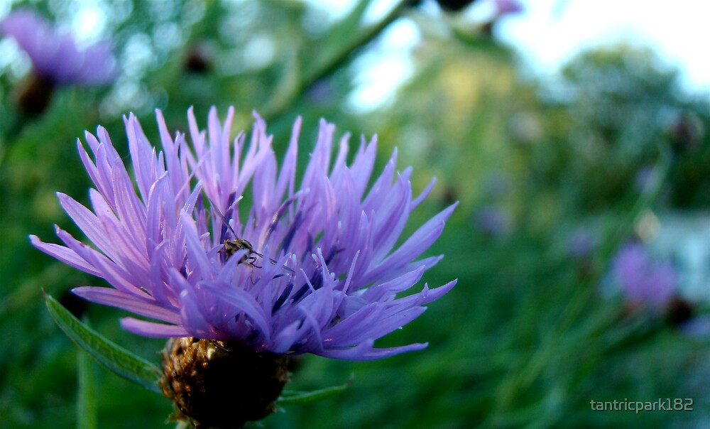 busy bee by tantricpark182