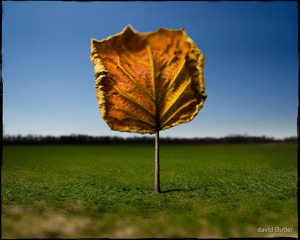 Tree Leaf PT.2 by david Butler