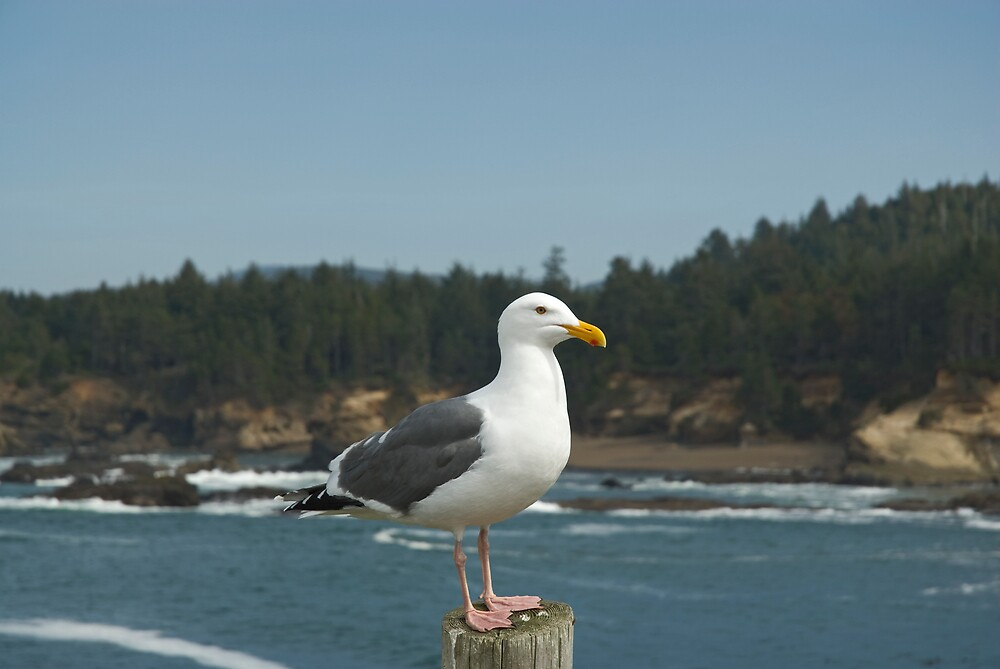 Portrait of a Seagull by Randall Scholten