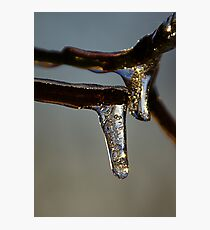 Drops Photographic Print