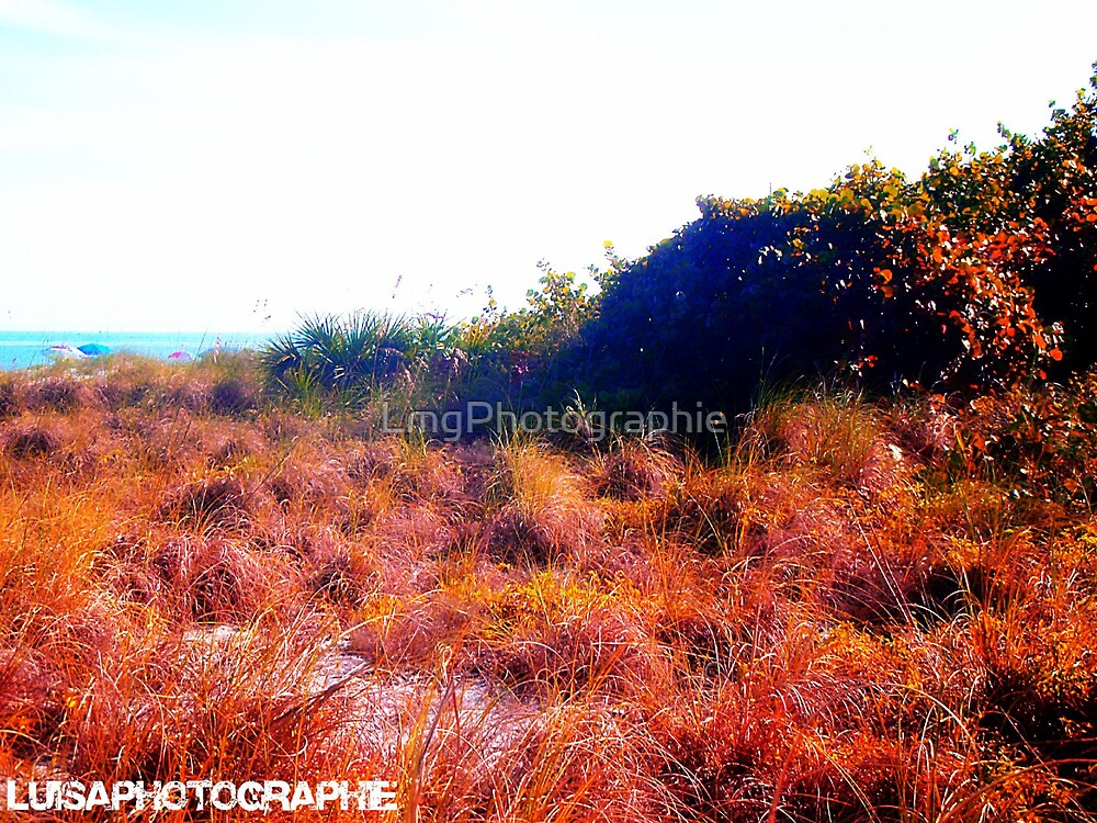 Field by LmgPhotographie