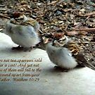 Chipping Sparrows by Glenna Walker