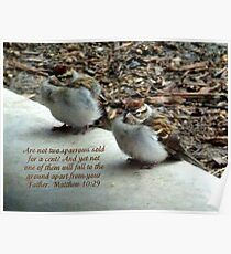 Chipping Sparrows Poster