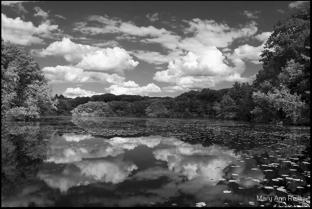 Pond, Late Spring by Mary Ann Reilly