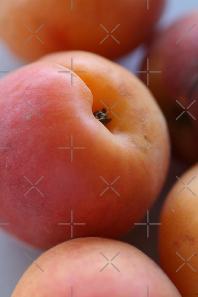 Apricot by Joy Watson
