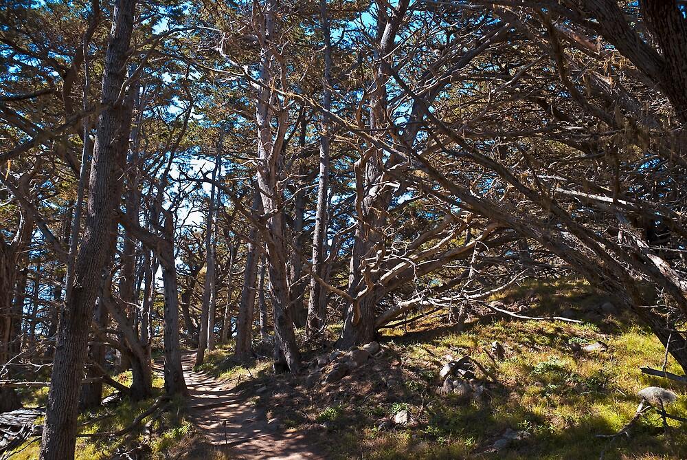 Cypress Grove Trail, Point Lobos, California by MarkEmmerson
