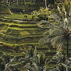Postcards from Bali by HarbingerX