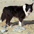 At the seaside  with Indy by Michael Haslam