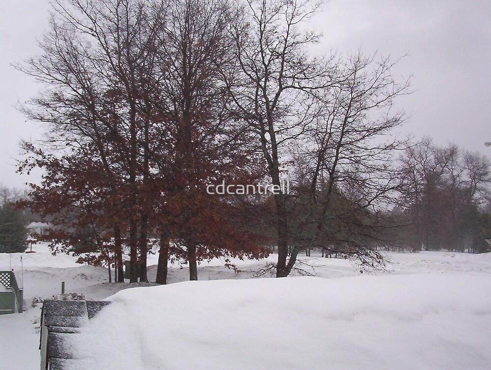 snow, snow, snow, by cdcantrell