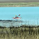EXPLORING THE MARSHES by DianaMatisz