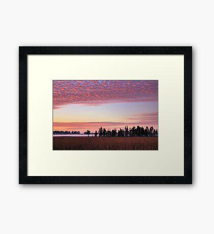 Florida Wilderness Framed Print