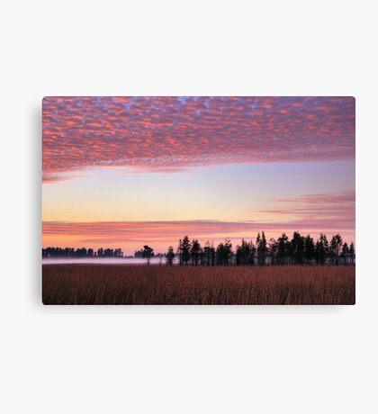 Florida Wilderness Canvas Print