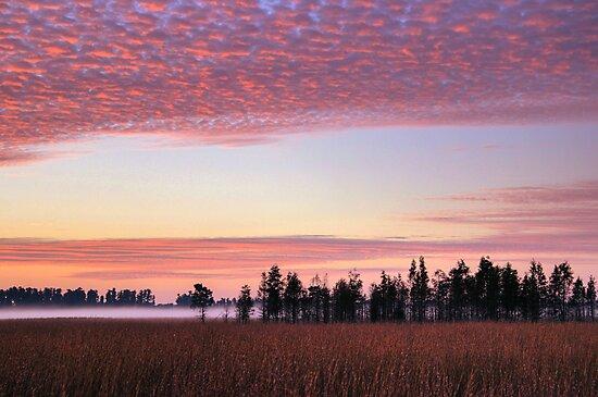 Florida Wilderness by MMerritt