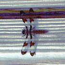 Dragonfly on Stripes II by Mike Solomonson