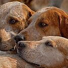 Fox Hounds (2) by SWEEPER