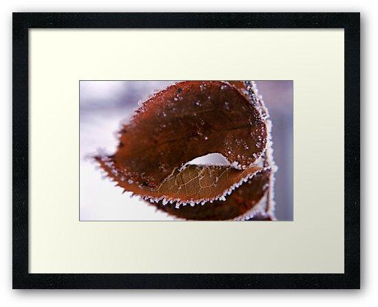 Icy Leaf by Brian Hendricks