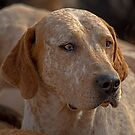 Fox Hound (3) by SWEEPER