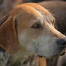 Fox Hound (4) by SWEEPER