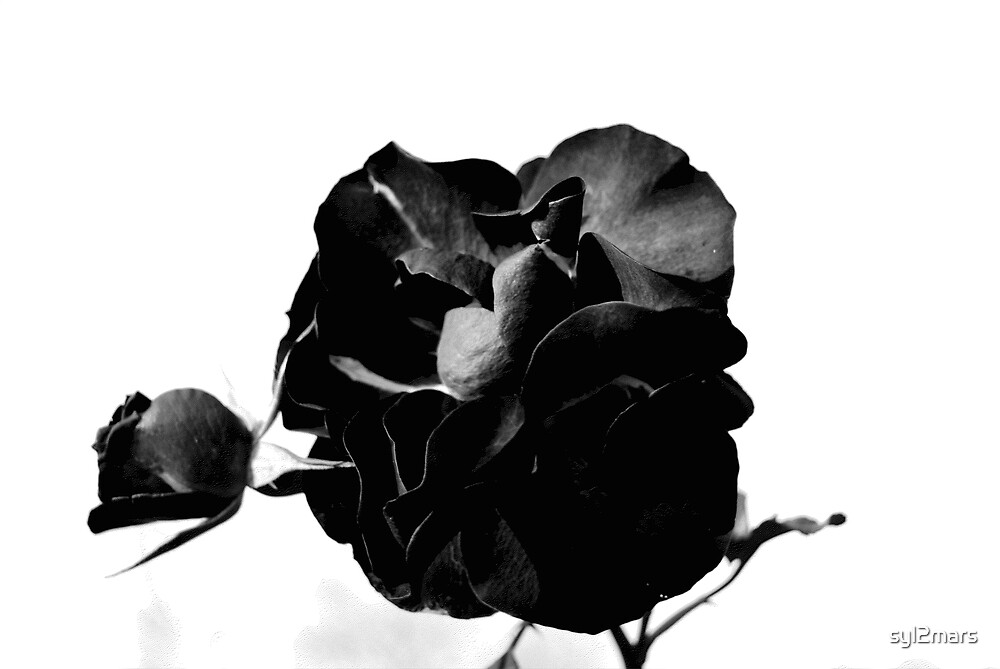 flower by syl2mars