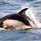Dolphin by Monica Di Carlo