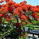Red tree by Kasia  Kotlarska