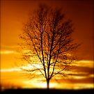 Winter Sunset by Robert Baker