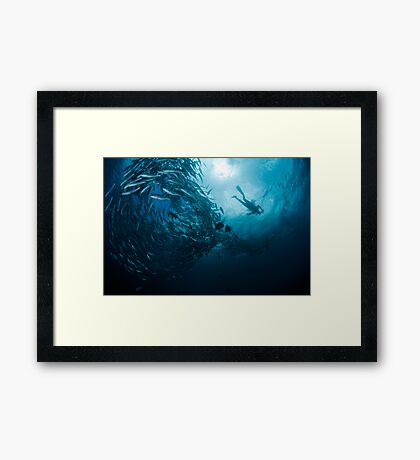 Schooling Jacks and Diver Framed Print