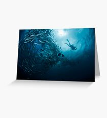 Schooling Jacks and Diver Greeting Card