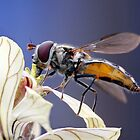 The Hover Fly and the Flower by sienebrowne