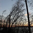 Sunset, pink clouds, trees, tree branches dance strange dance in the rays of sunset by znamenski