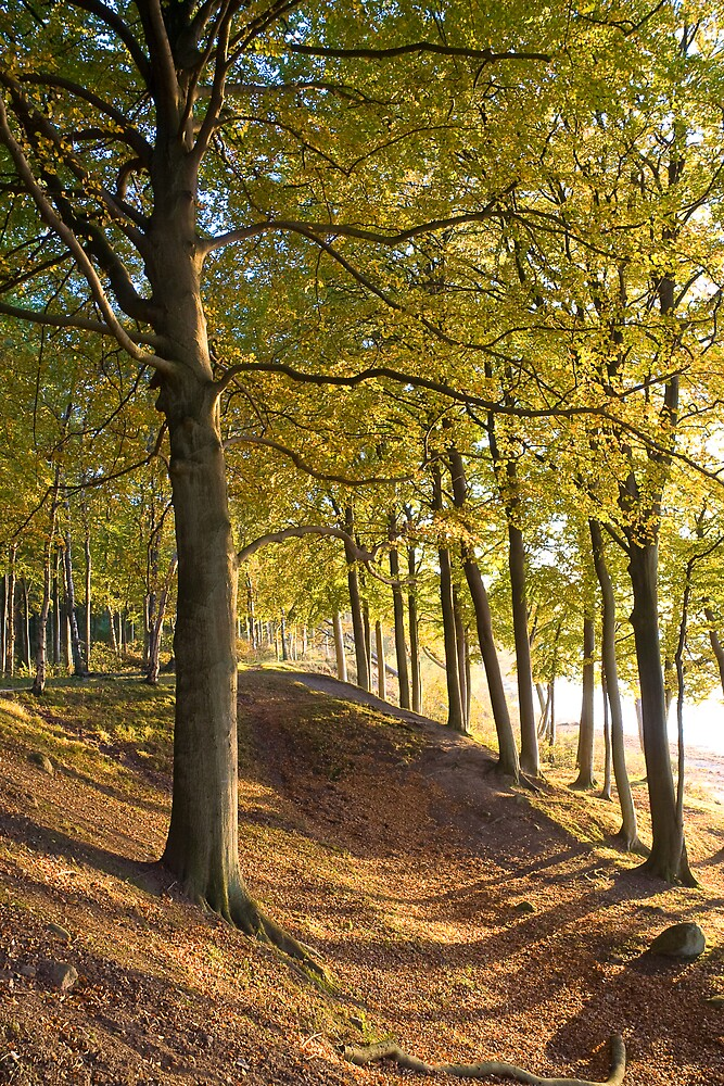 May beech forest - Moesgård, Denmark by Lars Clausen