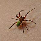 Tiny Spider by Robert Abraham