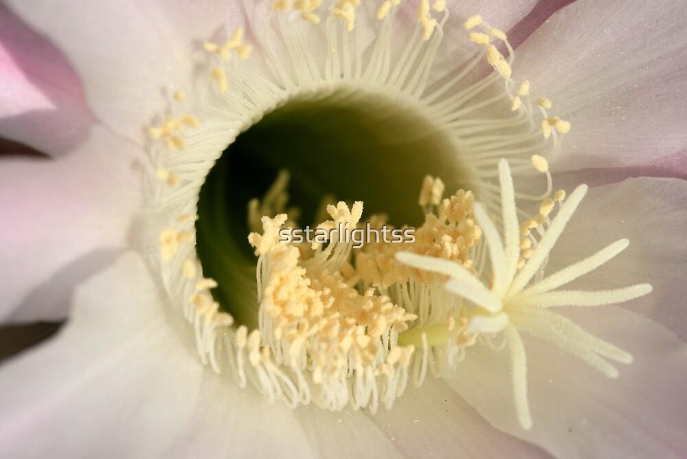 echinopsis close up by sstarlightss