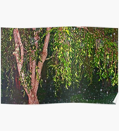 Weeping Willow In The Rain Poster