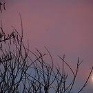Moonrise by LizzieMorrison