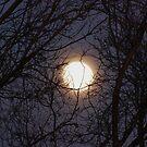 Moon by LizzieMorrison
