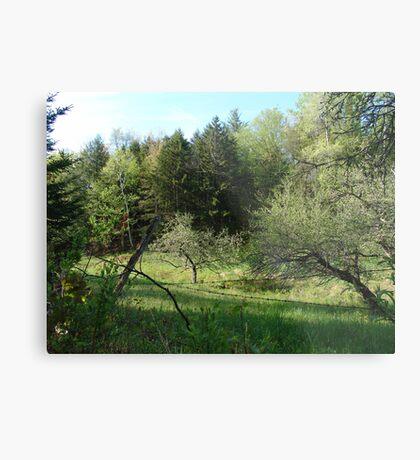 The Apple Orchard  Metal Print