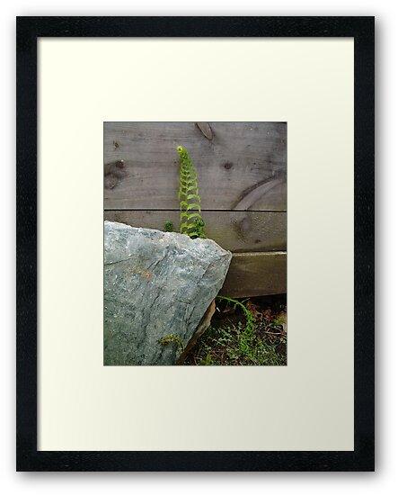 Fern and Rock by May Lattanzio