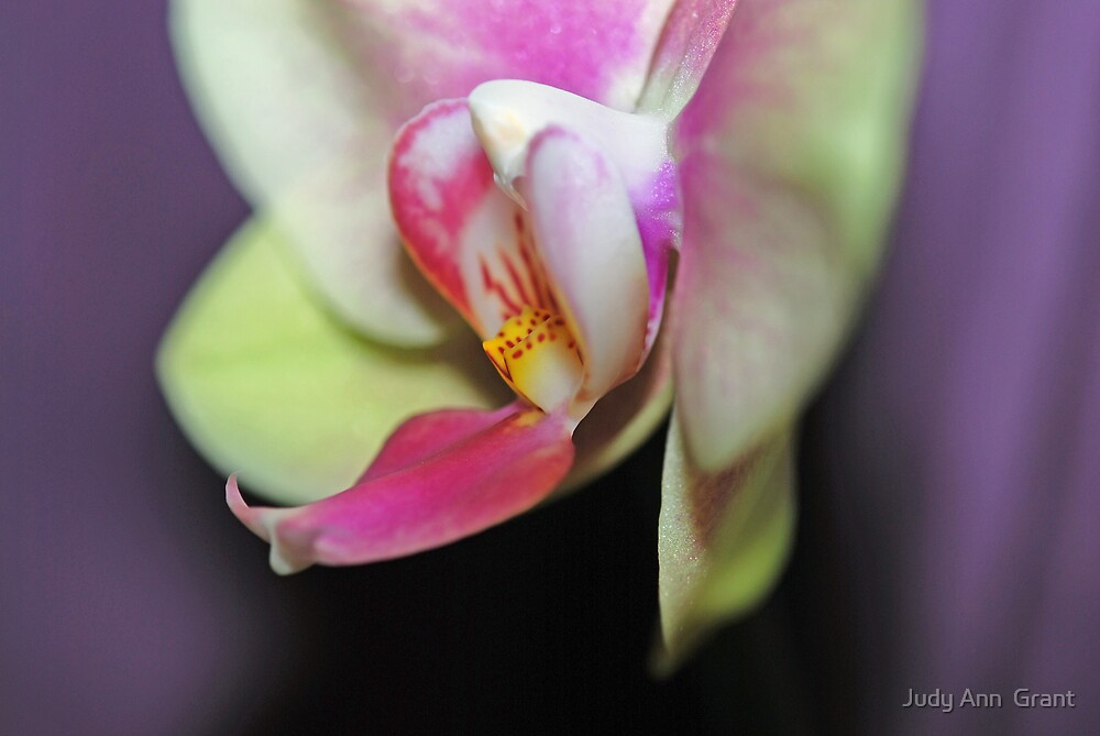 Awesome Orchid  by Judy Grant