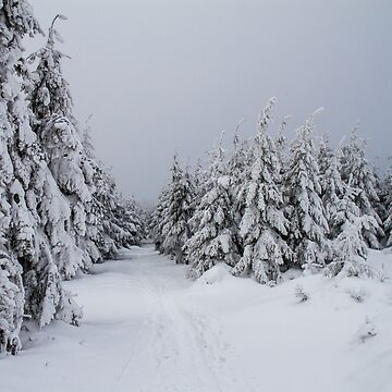 Winter in Owl Mountains by domcia