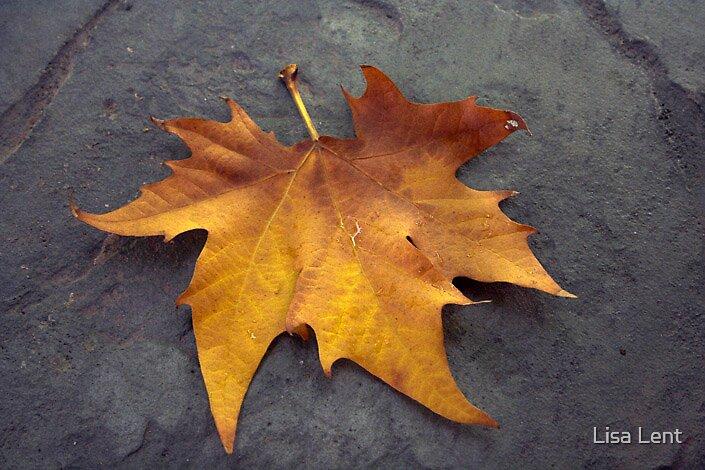 Autumn by Lisa Lent
