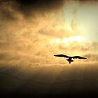 White Light Sunrise  by Polly Peacock