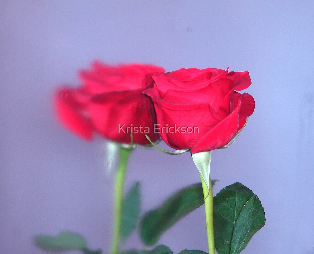 Reflected Beauty by Krista Erickson
